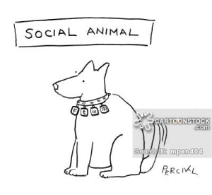 Social Animal.
